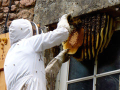 Have a swarm problem? Call us