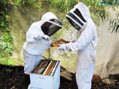 Hands on beekeeping workshops